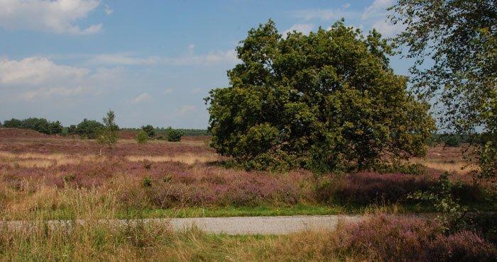 Heidevelden Veluwe