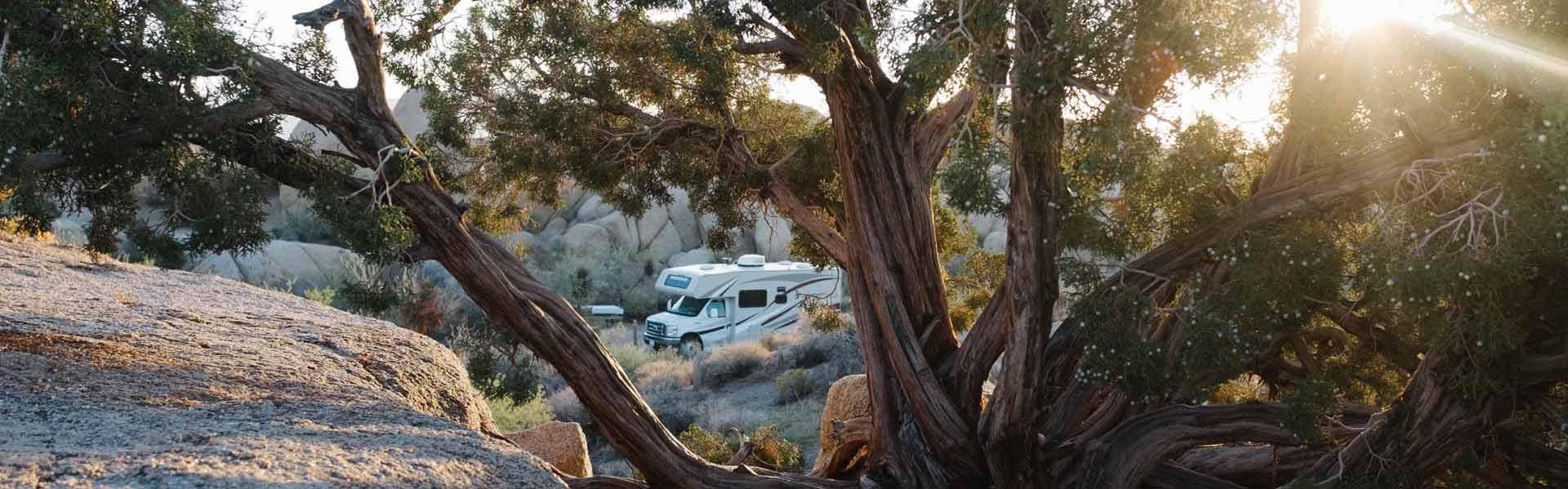 Bezoek Joshua Tree National Park tijdens een camperreis door Amerika met RoadBear