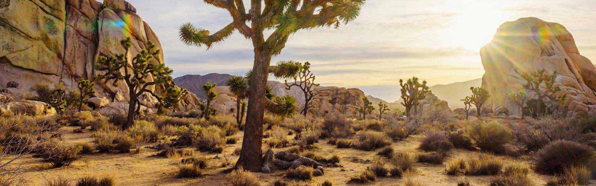 Ontdek het Joshua Tree National Park tijdens een camperreis door West-Amerika