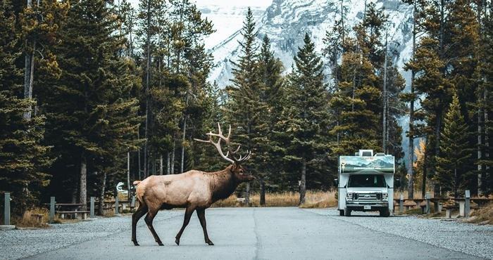 Cruise Canada in de natuur